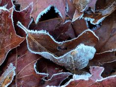 first frost of autumn