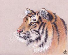Tiger by https://charlyjade.deviantart.com on @DeviantArt