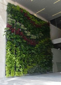 Looking for a Green-wall or Vertical garden in your space? Contact PlantFinderPro to connect you to Vertikal Garden, Vertical Green Wall, Green Facade, Green Roofs, Vertical Farming, Green Architecture, Architecture Design, Garden Living, Plantar