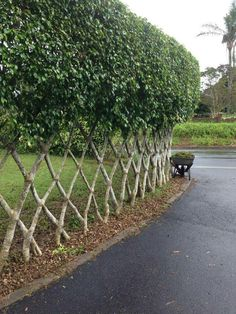 Latticed hedge fence - photo - Latticed hedge fence - photo flores y plantas Latticed Hedge Fence - Photo by Jon - Latticed hedge fence. AKA a - Garden Arbor, Backyard Garden Design, Backyard Landscaping, Hedges Landscaping, Country Landscaping, Backyard Ideas, Cerca Natural, Garden Screening, Living Fence