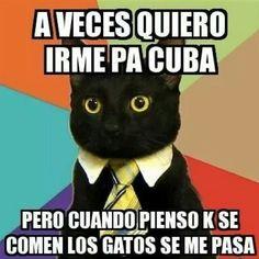 Cuban cat