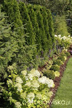 Ogród z lustrem Garden Planning, Backyard Landscaping, Landscape Design, Plants, Inspiration, Biblical Inspiration, Backyard Landscape Design, Landscape Designs, Plant