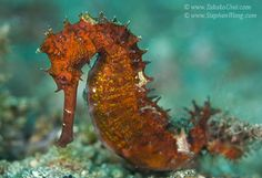 Diving KBR Resort - Lembeh Strait|Underwater Photography Guide