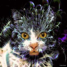 (2075) Cat