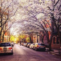 New York City Feelings - West Village, Springtime, New York City by...