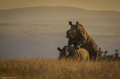 Help Save #JustOneRhino – Join the Movement to Win Big | The Planet D