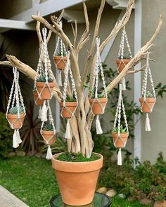cute is this succulent tree? 💚😍 - - How cute is this succulent tree? 💚😍 – -How cute is this succulent tree? 💚😍 - - How cute is this succulent tree? Macrame Art, Macrame Projects, Garden Crafts, Garden Art, Container Plants, Container Gardening, Succulent Gardening, Mini Plantas, Succulent Tree