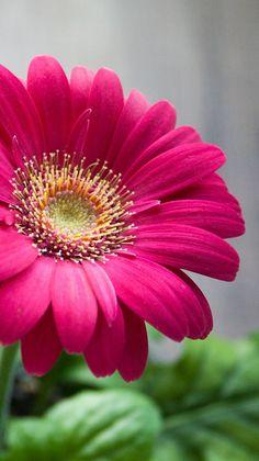 Great flower, 35 best flower photos