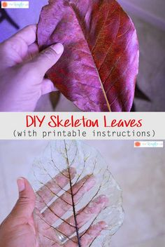 How To Make Skeleton Leaves (with Printable Instructions) - The Kreative Life - - I had to make sure the leaves were waxy and veiny because they work the best. Here is my step-by-step tutorial on how to make skeleton leaves. Autumn Crafts, Fall Crafts For Kids, Nature Crafts, Crafts To Sell, Fun Crafts, Arts And Crafts, Paper Crafts, Sell Diy, Diy Niños Manualidades