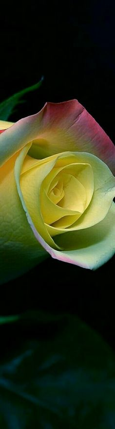 Eye For Beauty, Flower Boutique, Kind Person, Love Rose, Beautiful Roses, Flower Power, Garden, Plants, Photography