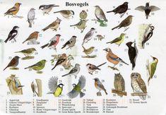 vogel platen herkennen - Google zoeken