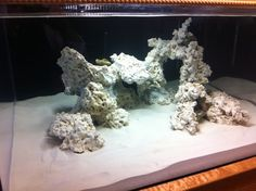Minimalist Aquascaping - Page 32 - Reef Central Online Community