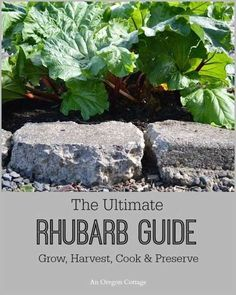 The Ultimate Rhubarb Guide: Grow, Harvest, Cook & Preserve - An Oregon Cottage. I can't wait until I can grow my own rhubarb! Veg Garden, Fruit Garden, Edible Garden, Lawn And Garden, Flowers Garden, Vegetable Gardening, Veggie Gardens, Geraniums Garden, Garden Urns