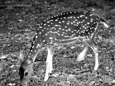 Ngeliat rusa di taman kemang pratama. foto ini jelek soalnya cahayanya kurang banget. Maklum udah kesorean.