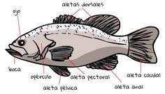 Partes de un pez |