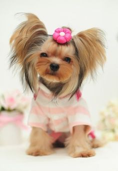 Hotsale winter dog clothing warm winter dog clothes for small large chihuahua cat cute wholesale pet products dog coats jackers | Cute Pet Products