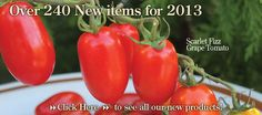 Territorial Seed Company: Cottage Grove, OR, 800-626-0866.    The company grows 20 percent of its vegetable catalog, including multiple varieties of lettuce, tomatoes, cucumber and squash. All offerings are subject to trials in the company's two Oregon test gardens.