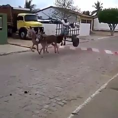 Meanwhile somewhere on earth 🌍 - Cars & Bikes - Funny As Hell, Stupid Funny, Hilarious, Funny Car Memes, Car Humor, Memes Humor, Donkey Funny, Peugeot, Instant Pot