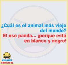 ¿Cuál es el animal más viejo del mundo? Funny Spanish Jokes, Spanish Humor, Spanish Quotes, Crazy Funny Memes, Wtf Funny, Funny Texts, Funny Jokes, Funny Images, Funny Pictures