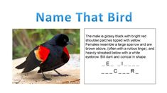 Gulf Coast Bird Observatory