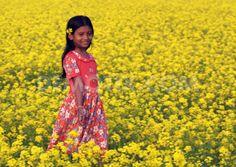 mustard fields - Google Search