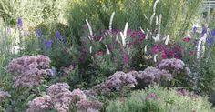 Im Oktober färbt sich das Laub vieler Pflanzen im Garten bereits in den leuchtendsten Farben. Diese Stauden trumpfen jetzt sogar noch mit bunten Blüten auf.