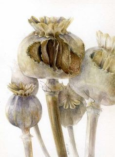 Poppy seed pods pecked open, by Elaine Searle. Contemporary