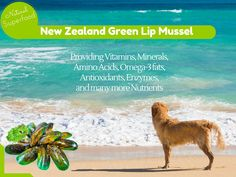 Did you know that Green Lip Mussel from New Zealand is a Superfood for your Pets?  Did you know that is well known to reduce pain and swelling in joints suffering from Arthritis, Osteoarthritis or Rheumatism? visit our website to find out how our Advanced Probiotics with Green Lip Mussel can help your Pets...#GreenLipMussel #Pets