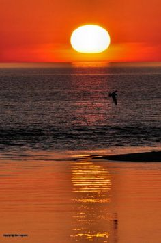 A gull flies by the Big Sable River outlet to Lake Michigan at sunset in early spring.