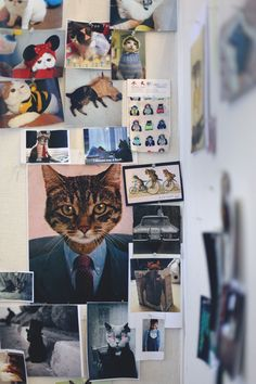 scenes-from-the-office-cat-wall