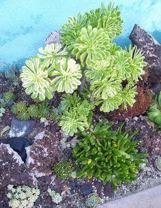 Garden Ideas Picture: Succulent Garden Ideas