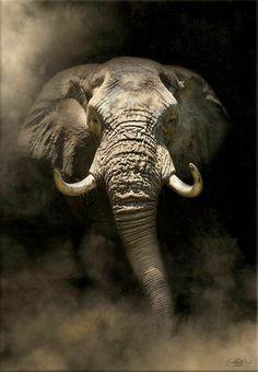 Elephant Artwork, Elephant Pictures, Elephants Photos, Elephant Canvas, Funny Animal Pictures, Elephant Images, Wild Animals Photography, Elephant Photography, Bull Elephant