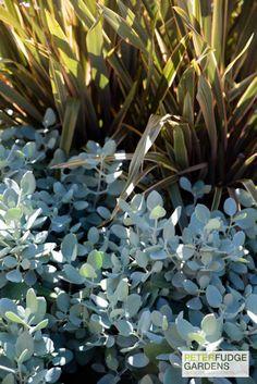 Plant combinations #peterfudge