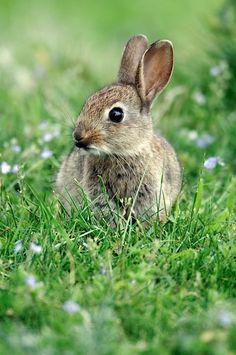 Lovely bunny :)