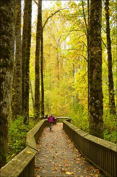 Nisqually National Wildlife Refuge Boardwalk, Washington State - listening to the trees Oh The Places You'll Go, Places To Travel, Places To Visit, All Nature, Walking In Nature, Washington State, Olympia Washington, Alaska, Evergreen State