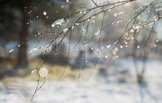 fine art prints, nature pictures, forest, snow, photos,