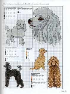 Gallery.ru / Фото #17 - Picture Your Pet in Cross Stitch - patrizia61 poodle dog's.