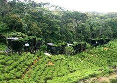 The Rain Forest Eco Lodge, Sinharaja - Sri Lanka