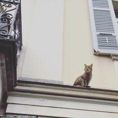 Somebody's waiting #home #cat