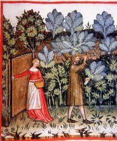 Tacuinum Sanitatis, ca. 1400 Cabbage