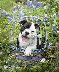 Happy Spring! Celebrate National puppy day, March 23rd!