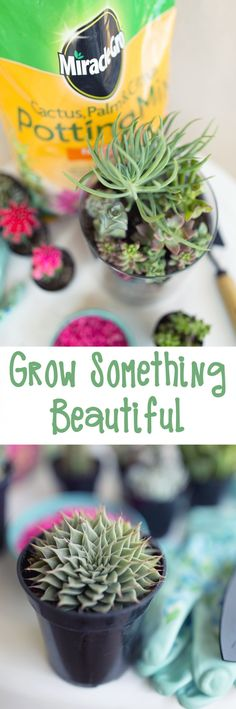 Grow Something Beautiful! Miracle-Gro Potting Mix ensures Influencer Katherine's @happysolez plants are happy, for whatever project she has in mind. #ad