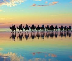 #Camels break up the sunset over Broome, Western #Australia.