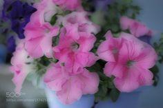Pink by oc0404. @go4fotos