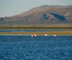 Informacion turistica sobre el Monumento Natural Laguna de los Pozuelos en la provincia de Jujuy. Hacé click y descubrilo ! Mountains, Natural, Travel, The World, Flamingos, Wonderful Places, National Parks, Places To Visit, Trips