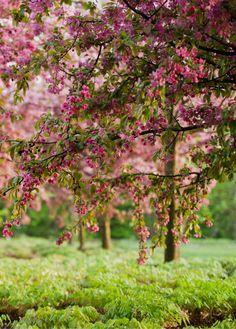 (notitle) The post appeared first on Berable. Garden Pool, Garden Art, Garden Landscaping, Beautiful Flowers Garden, Beautiful Gardens, Beautiful Scenery, Horticulture, Plant Design, Garden Design
