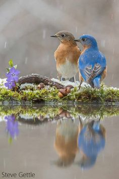 AmbientEntropy Animals And Pets, Cute Animals, Love You Images, Good Morning Flowers, Backyard Birds, All Gods Creatures, Birds Eye View, Colorful Birds, Bird Feathers