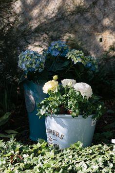 Diy Supplies, Garden Projects, Irish, Plants, Summer, Summer Time, Irish Language, Plant, Ireland