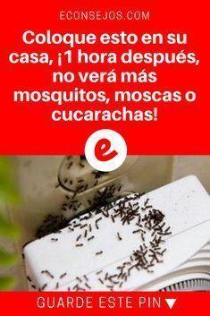 Eliminar insectos   Coloque esto en su casa, ¡1 hora después, no verá más mosquitos, moscas o cucarachas!   ELIMINE INSECTOS DE SU HOGAR, SIN UTILIZAR QUÍMICOS CONTAMINANTES. Y lo mejor es que usted sólo necesita 3 ingredientes para hacer esta receta. Aprenda aquí.