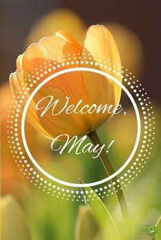 Looking for the best hello May quotes and pictures, photos & images? We have rounded…